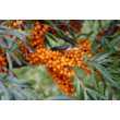 Mannavita MANNA-C étrend-kiegészítő, 230g